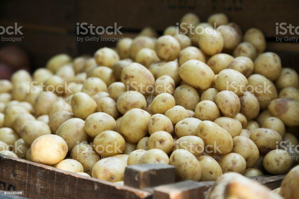 Baby potato stock photo