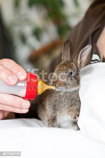 Bunny eating with baby bottle