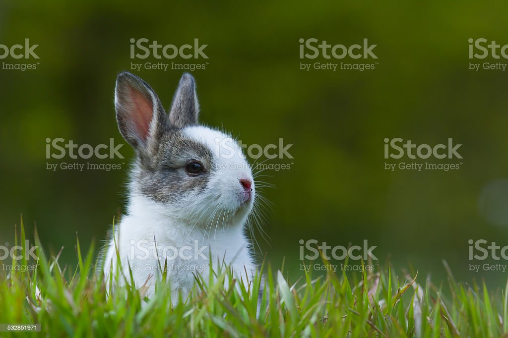 Baby rabbit in grass stock photo