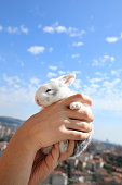 close up shot of baby rabbit in hands over blue sky
