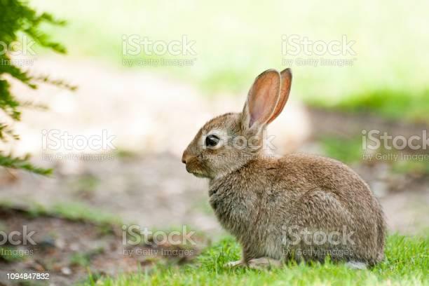 Baby rabbit in park paris picture id1094847832?b=1&k=6&m=1094847832&s=612x612&h=bl uwhiq9z9oiffxcyke82otyvxljdrluy46mxslsyo=