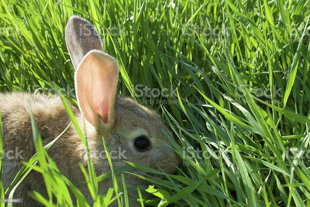 Baby rabbit on green grass stock photo