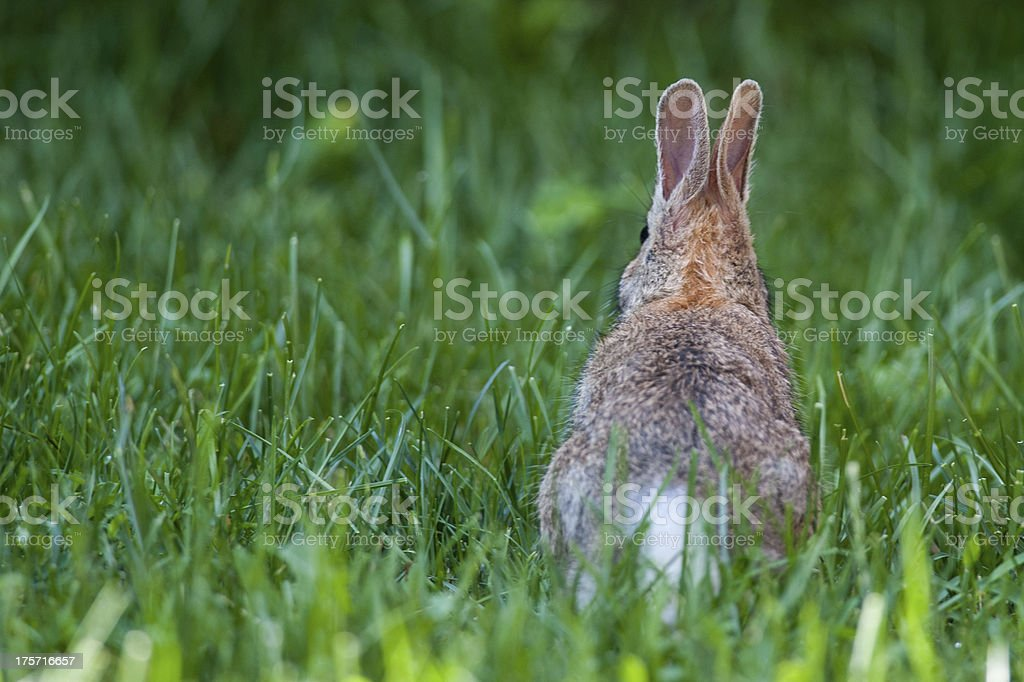 Baby rabbit on the grass stock photo