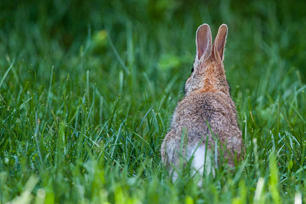 Baby rabbit on the grass stock photo