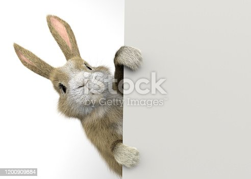 baby rabbit peeking behind a wall or a banner
