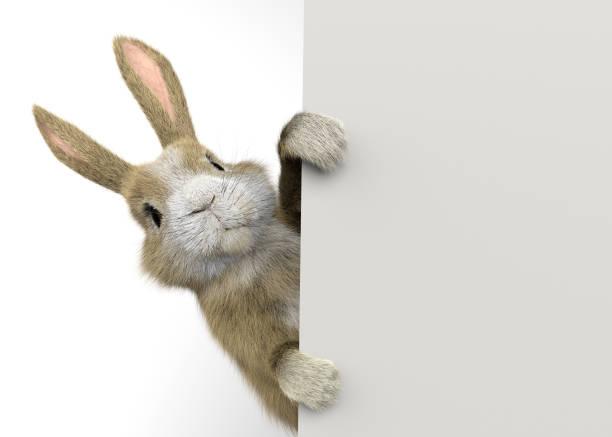 Baby Kaninchen guckt hinter einer Wand oder einem Banner – Foto