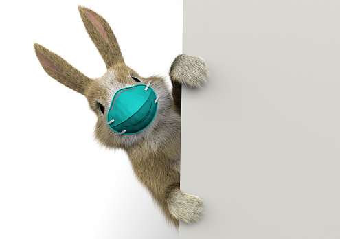 baby rabbit peeking behind a wall or a banner with a surgical mask
