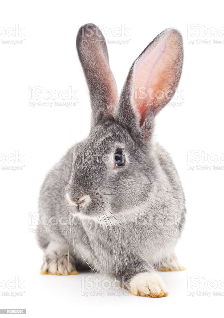 Baby rabbit. stock photo