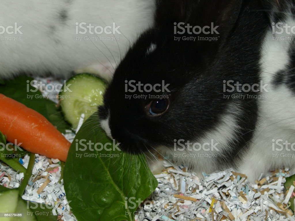 Baby Rabbit royalty-free stock photo