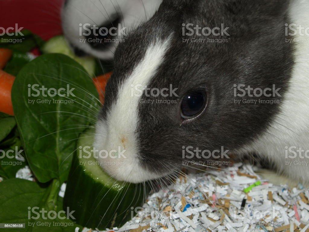 Baby Rabbit royalty-free stock photo