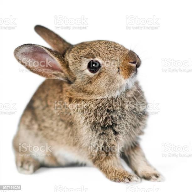 Baby rabbit picture id937791026?b=1&k=6&m=937791026&s=612x612&h=ibknuj gzfpeqvvrgk sofqxj5zimpxuarzavl3gfui=