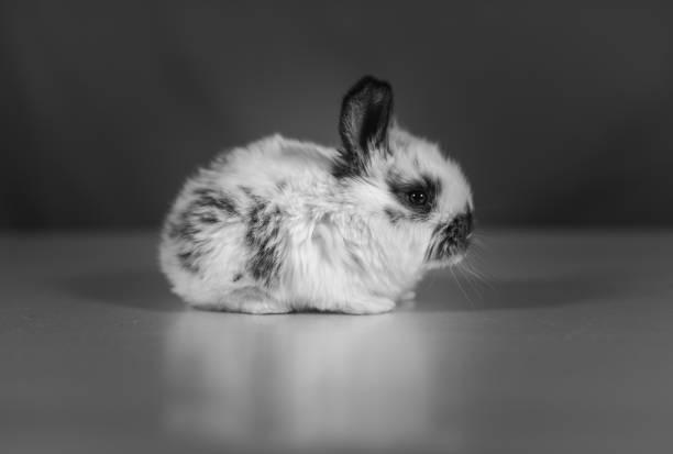 baby rabbit - schöne osterbilder stock-fotos und bilder