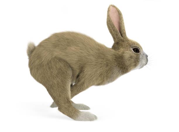 Baby Kaninchen läuft Seitenansicht – Foto