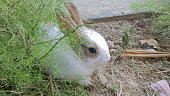 A baby rabbit sitting in side of grass with quietly and quit. raising ear.
