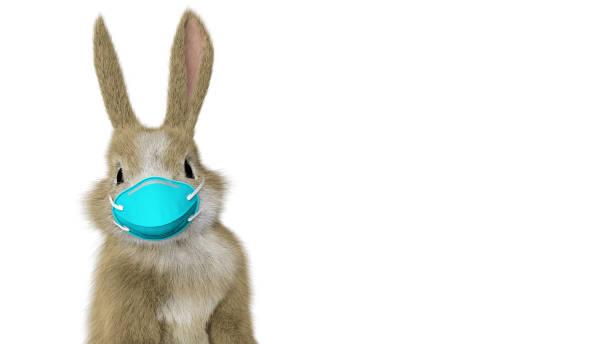Baby Kaninchen stehen und schauen sich mit einer chirurgischen Maske – Foto