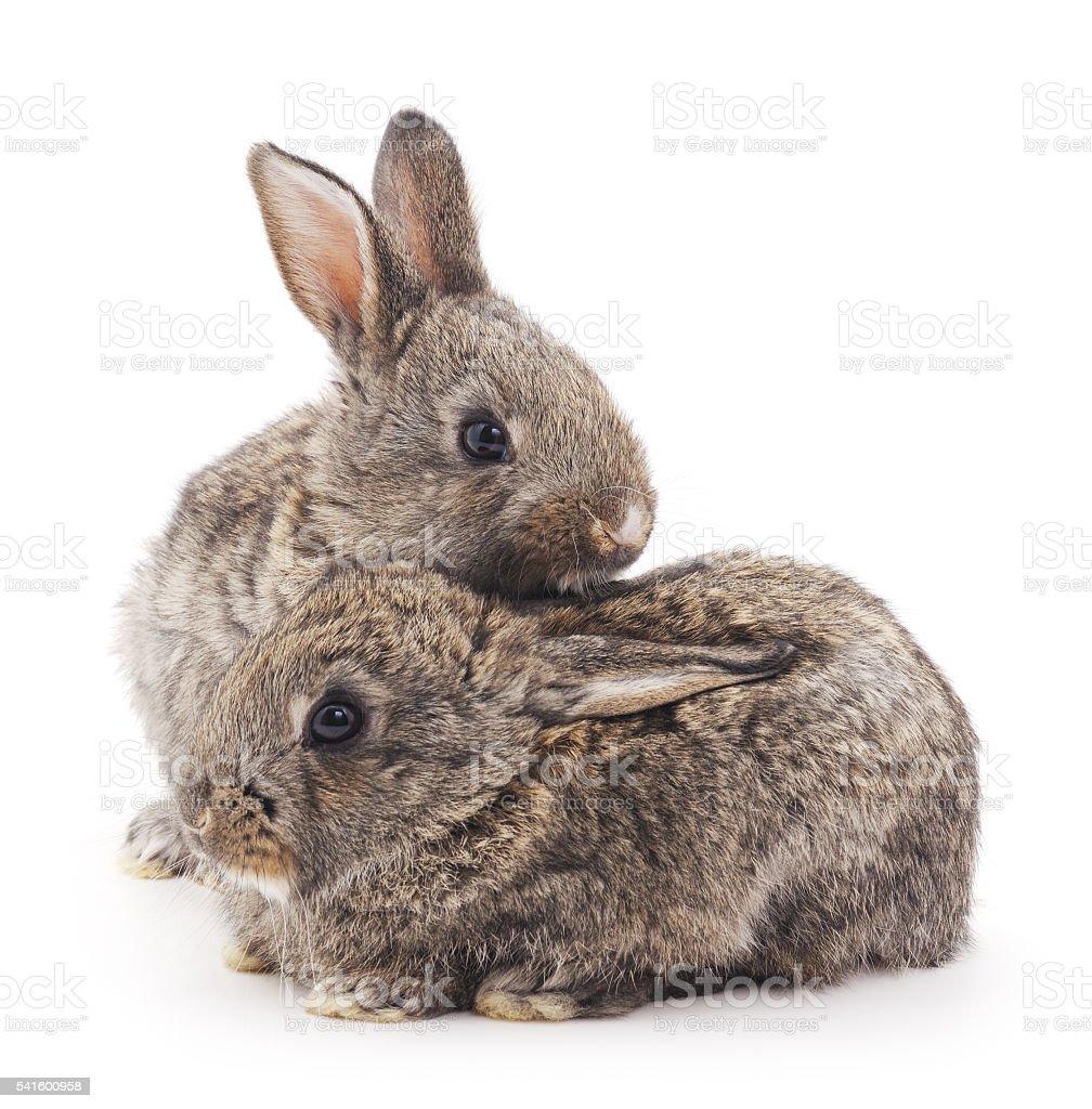 Baby rabbits. stock photo