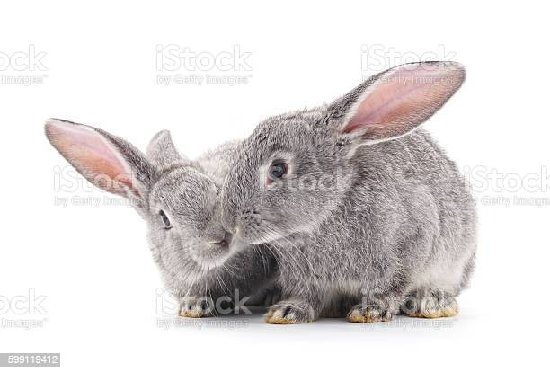 Baby rabbits picture id599119412?b=1&k=6&m=599119412&s=612x612&h=lf2fsyiefgltqkrdka9kiyulcpfeu7vjy6wyug 7xuu=