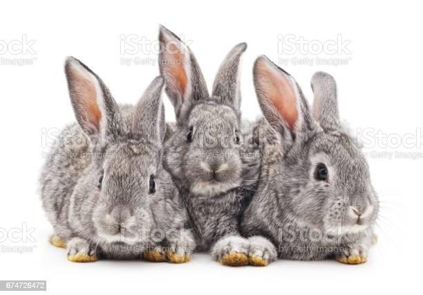 Baby rabbits picture id674726472?b=1&k=6&m=674726472&s=612x612&h=fq9d1ophlmlnt08lon5bfikdmvfmnpgnnclxwlij6b4=