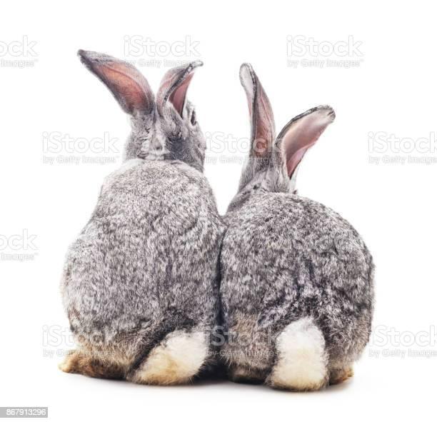 Baby rabbits picture id867913296?b=1&k=6&m=867913296&s=612x612&h=u0clt8c8wgfqaagn e9ipo7re81ndxukllfpg8ydlgk=