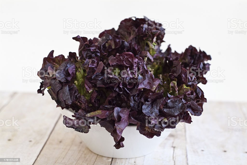 Baby red lettuce in white bowl stock photo