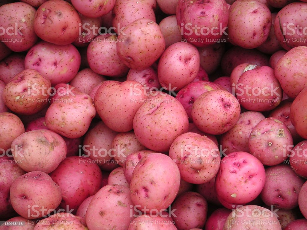 Baby Red Potatoes stock photo