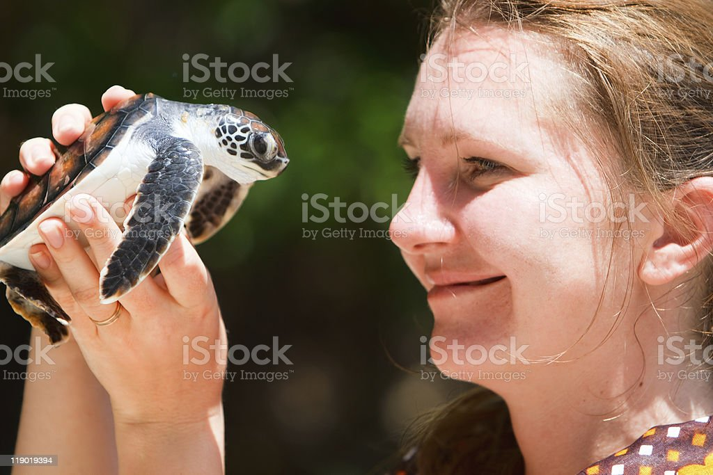 Baby sea turtle stock photo