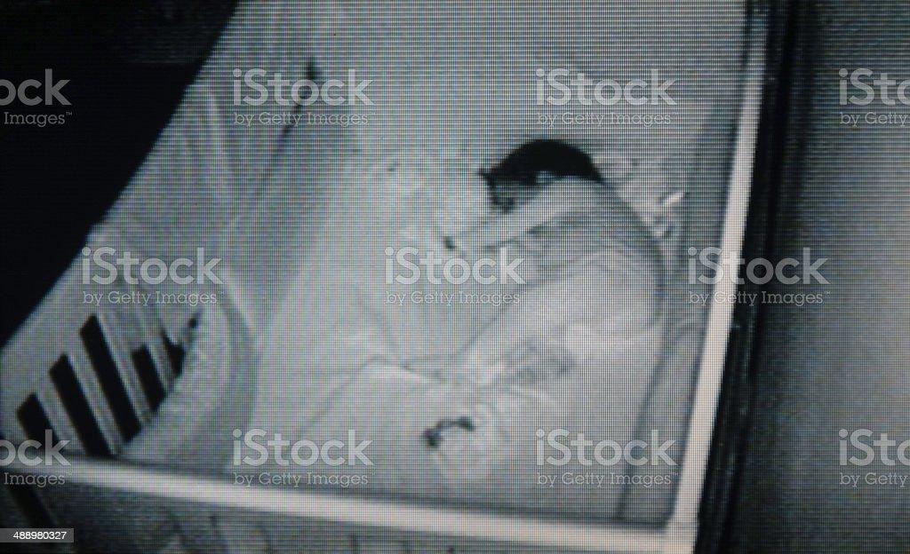 Baby security stock photo