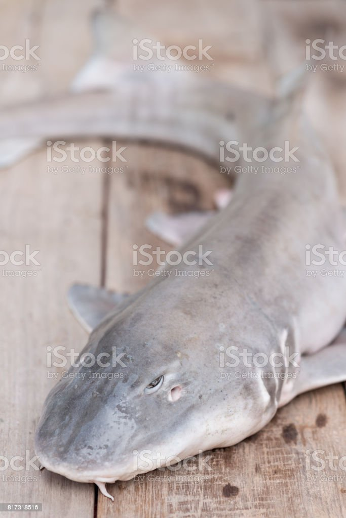 Baby shark dead on wood board. stock photo