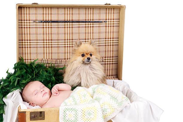 baby schlafen in einem koffer mit hund - jungendecken häkeln stock-fotos und bilder