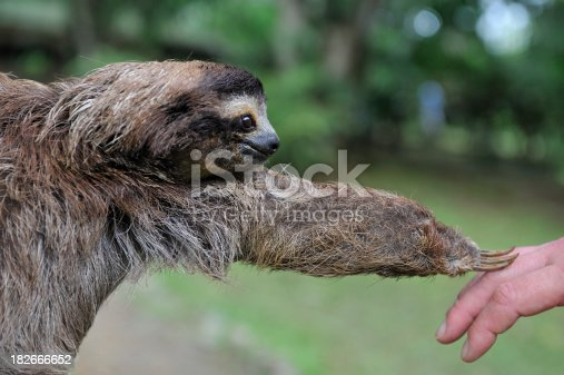 Contact between jungle animal and human.