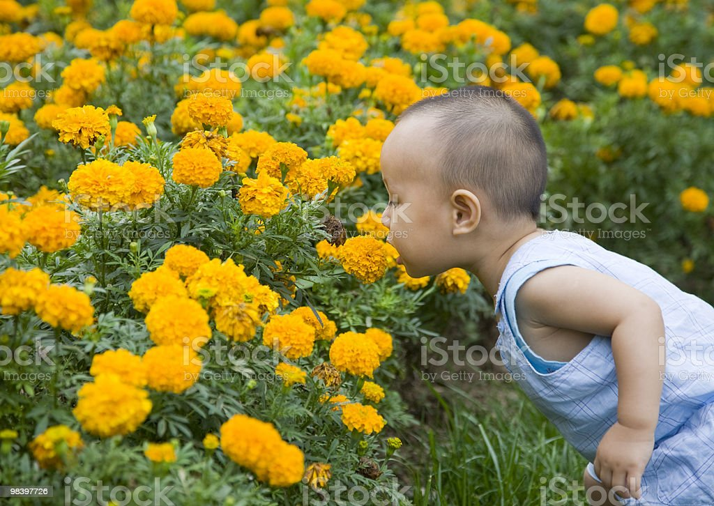 baby smelling  flowers royalty-free stock photo