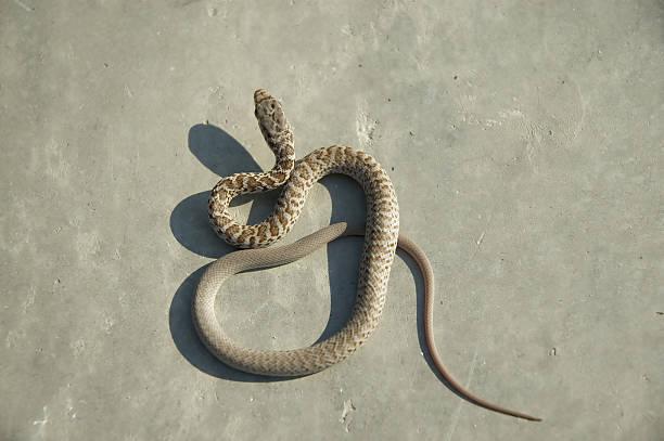 Baby Snake 2 stock photo