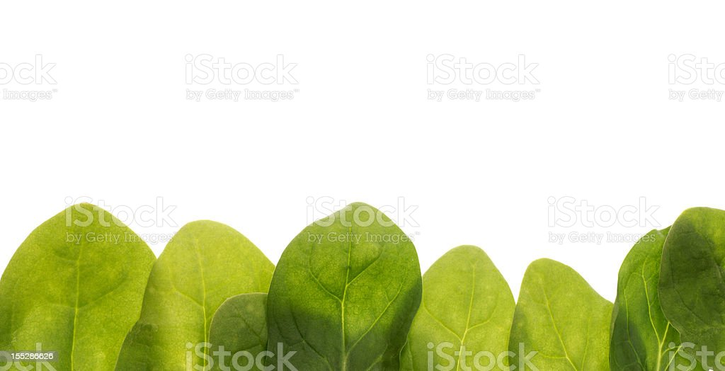 Baby Spinach Leaves Border Frame Food Background royalty-free stock photo