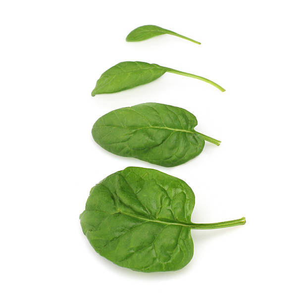 Baby Spinach leaves on the white background stock photo