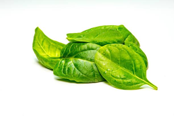 baby spinach - szpinak zdjęcia i obrazy z banku zdjęć