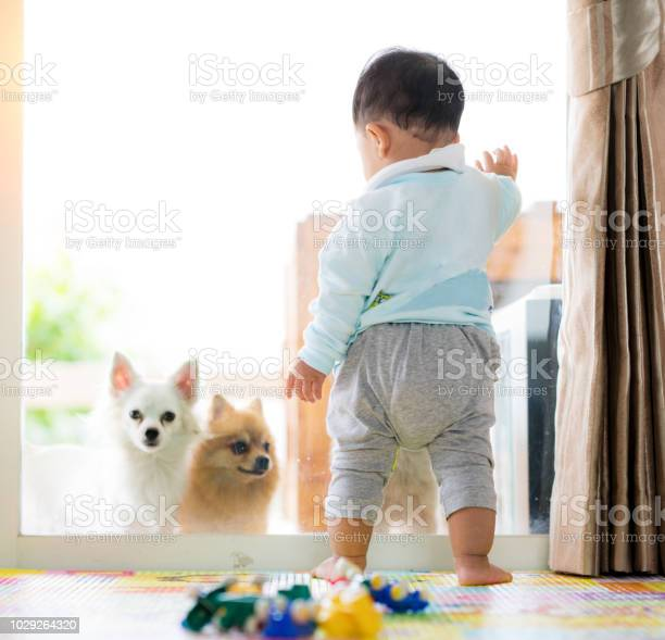 Baby stand in living room and see a little dog out side a door picture id1029264320?b=1&k=6&m=1029264320&s=612x612&h=8xgmnfhkssb4l58 djjd4jyrzsgorrscola51iu uay=
