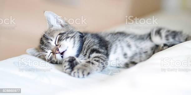 Baby tabby sleeping picture id528865977?b=1&k=6&m=528865977&s=612x612&h=rrn2rgojob ynyrdf ghpj61pa7vvabyzkrhrwoj6vs=