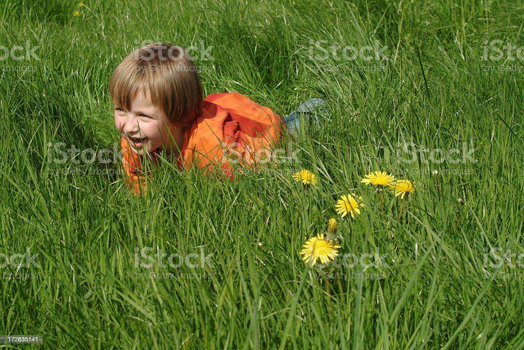 Baby Tiger with Dandelions royalty-free stock photo
