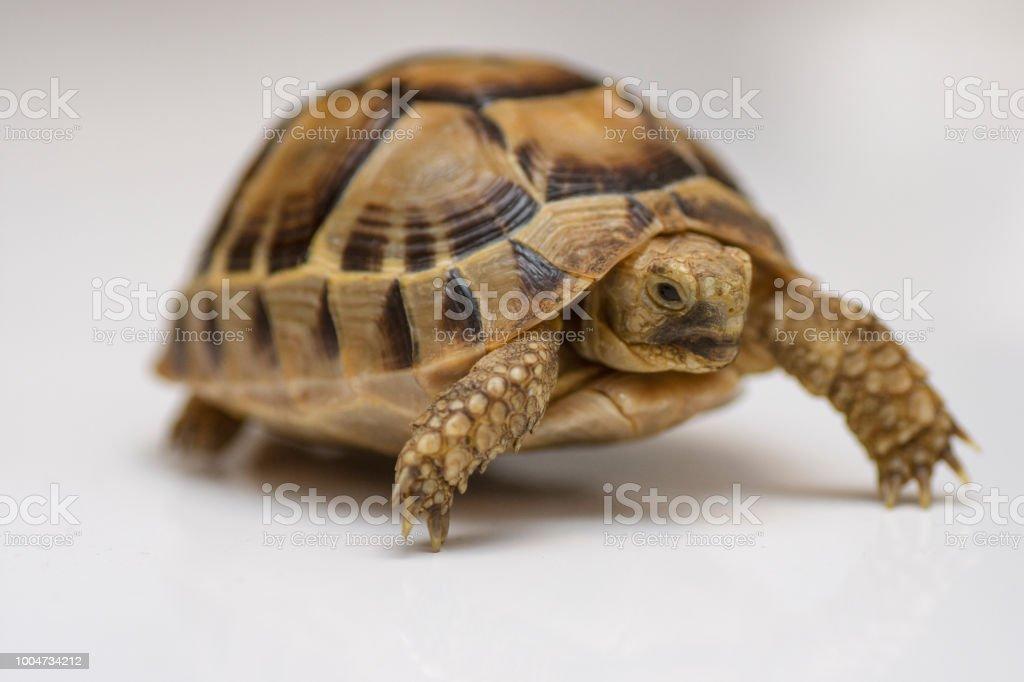 Baby turtle stock photo