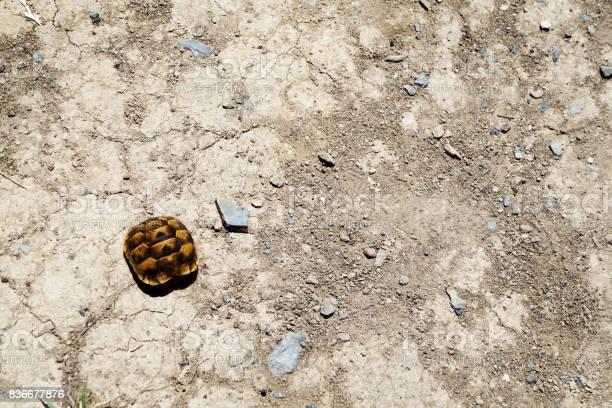 Baby turtle picture id836677876?b=1&k=6&m=836677876&s=612x612&h=pqvzqfqdqh3zyilc5bftm4zirvac3lqyvfst3dnf ti=