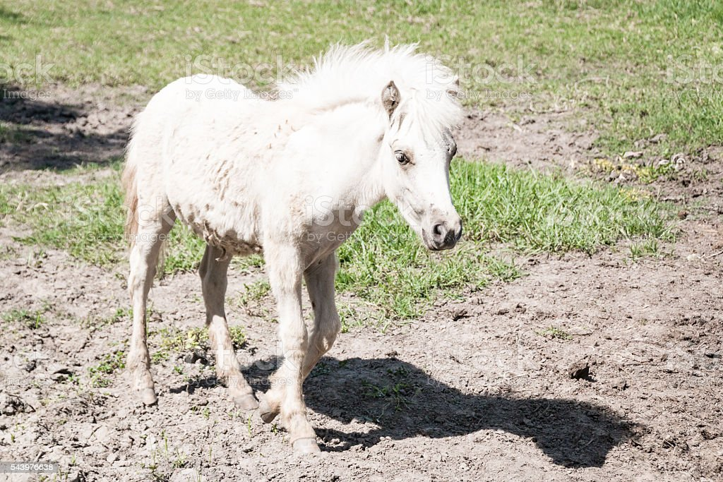 Baby White Horse And Nature Background Stock Photo Download Image Now Istock