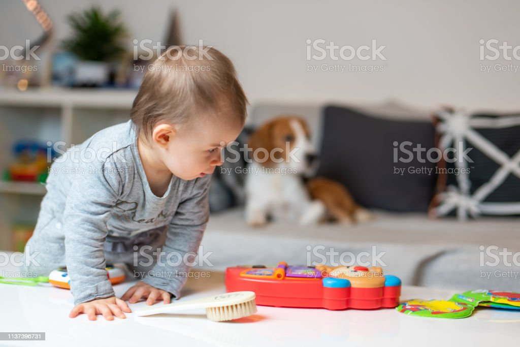 Baby with a Beagle dog in home. Family friendly dog in house. Dog lie...