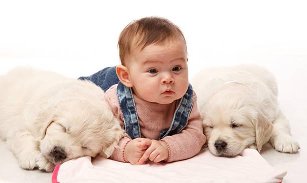 Baby mit Hunden – Foto