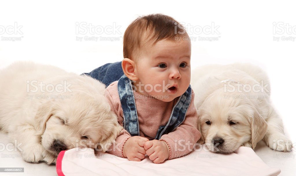 Baby with dogs stock photo