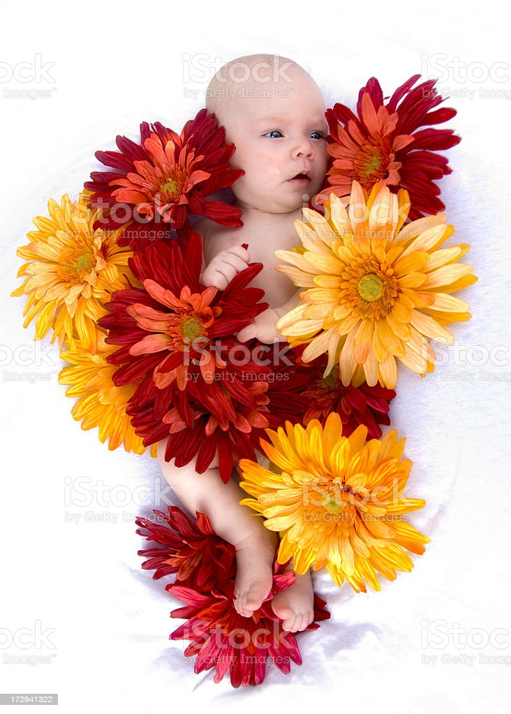 Baby with Flowers royalty-free stock photo