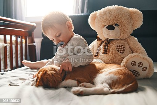942206906 istock photo baby with his puppy friend enjoying at home 953459632
