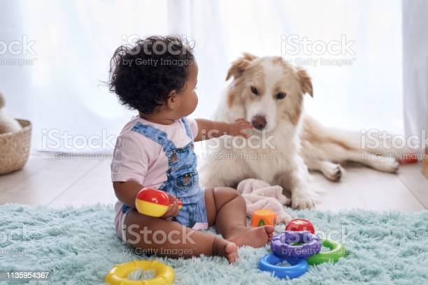 Baby with pet dog at home picture id1135954367?b=1&k=6&m=1135954367&s=612x612&h=xx3 tcd9ylto6 1mjxcqn3zxzmvfjzlraeoiuwxs1i0=
