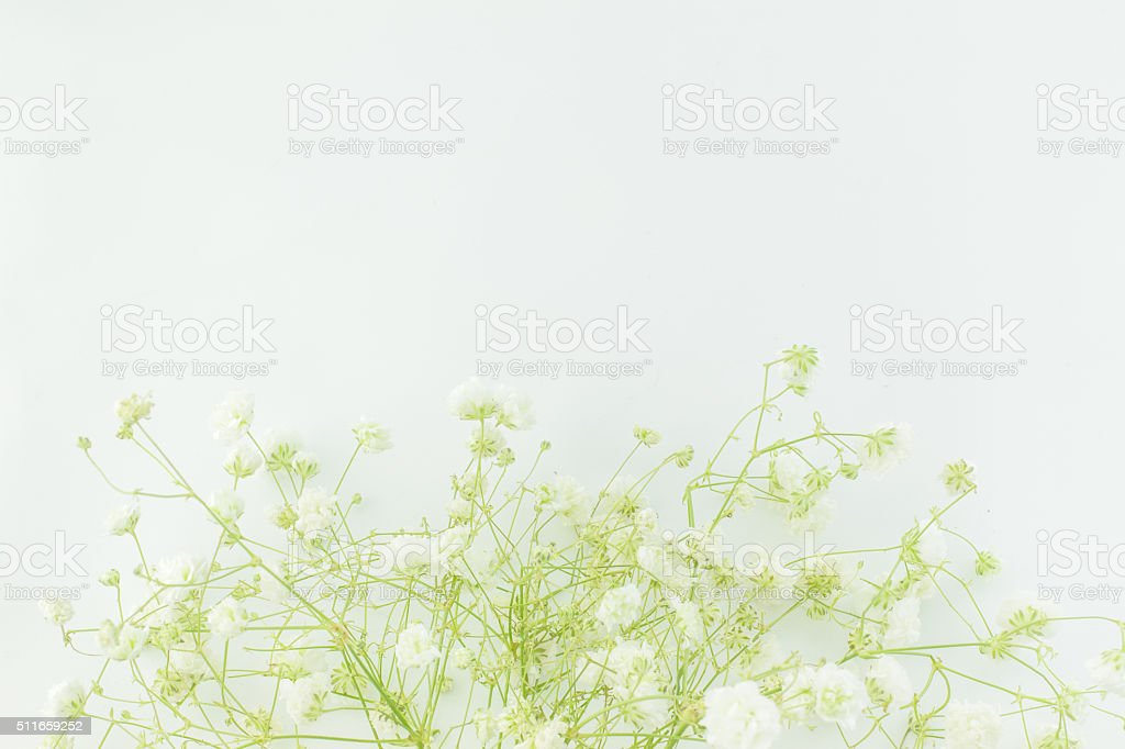 Baby's-breath flowers, light, airy masses of small white flowers
