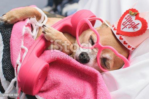 istock Bachelor Dog Falls Asleep On Phone 915404162