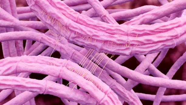 bacillus anthracis (anthrax) 3d illustration - antrace foto e immagini stock